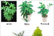 미세먼지저감에효과있는식물5.png